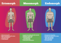 what is an ectomorph